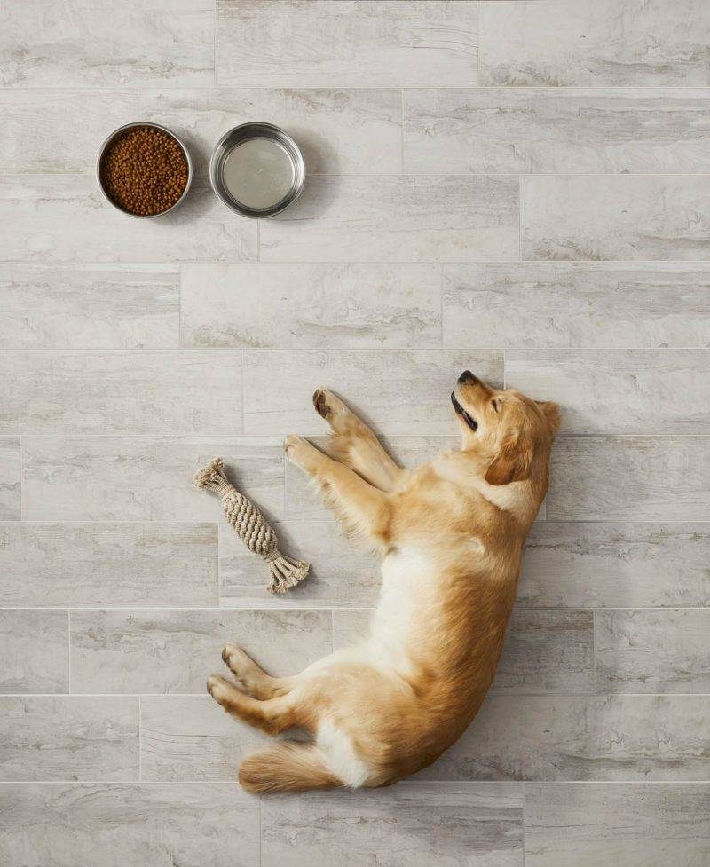 the best flooring for dogs the tile