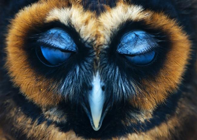 14271010-R3L8T8D-650-owl-photography-27__880-1