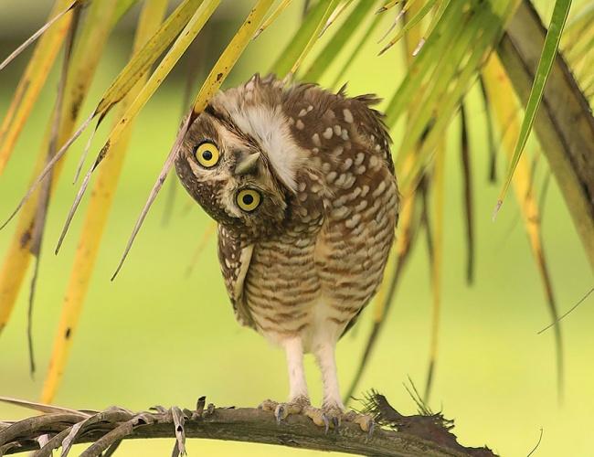 14266010-R3L8T8D-650-owl-photography-6__880