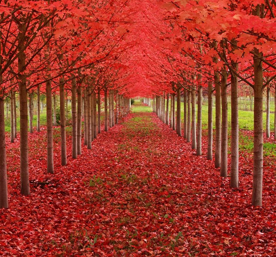 7530310-R3L8T8D-880-amazing-trees-4
