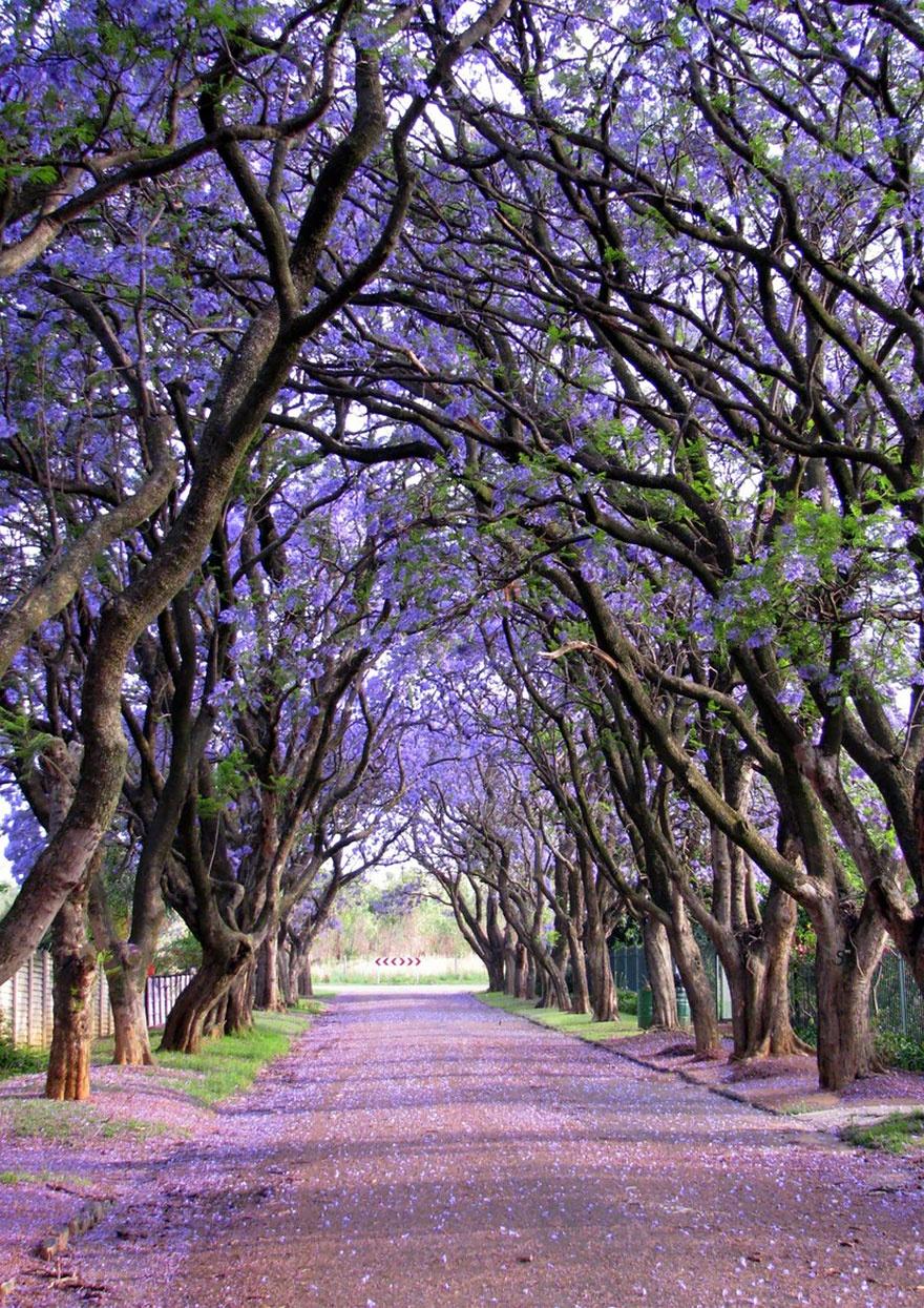 7530760-R3L8T8D-880-amazing-trees-9