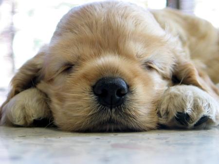 sleepy.jpg_w450