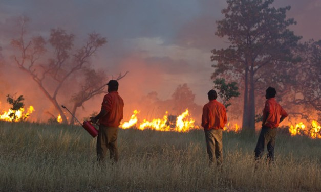 FOREST FIRE MANAGEMENT: THE SOLUTION