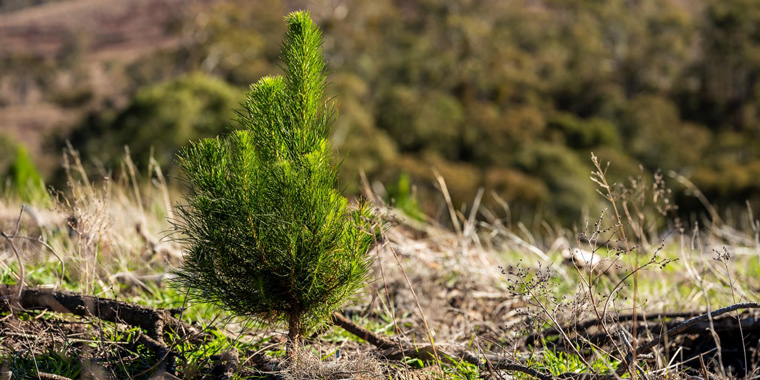 100 MILLION TREES … AND STILL COUNTING