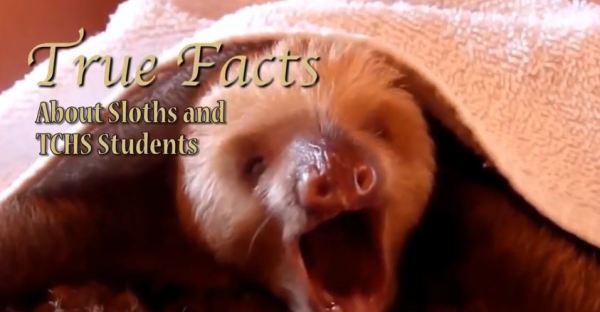 sloth tctv dec 12