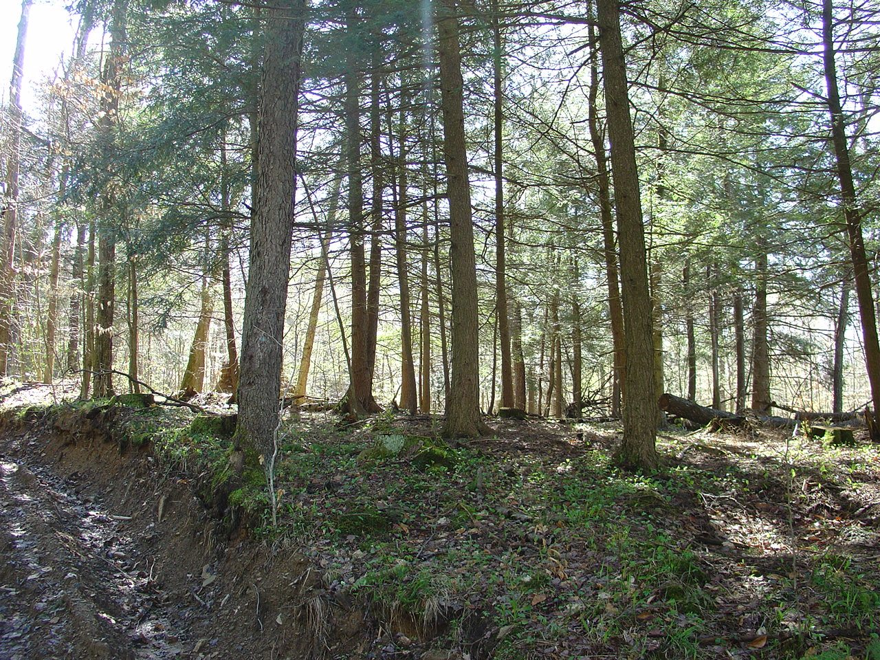 75.4 acres of wooded property, stream and adjoining Pine ...