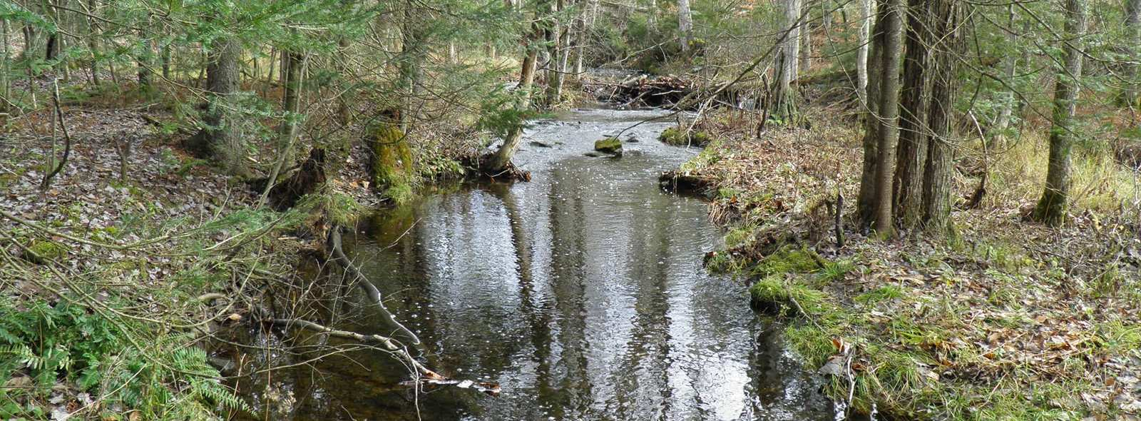 east branch tributary