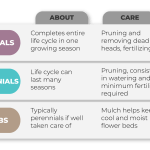 Types Of Flowers Bulbs Perennials Annuals Infographic Timberline Landscaping