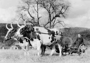 a-catskill-farm-pulling-cart