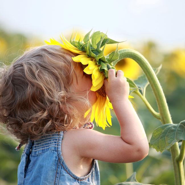 Keep Memories Alive through Senses - Sunflower