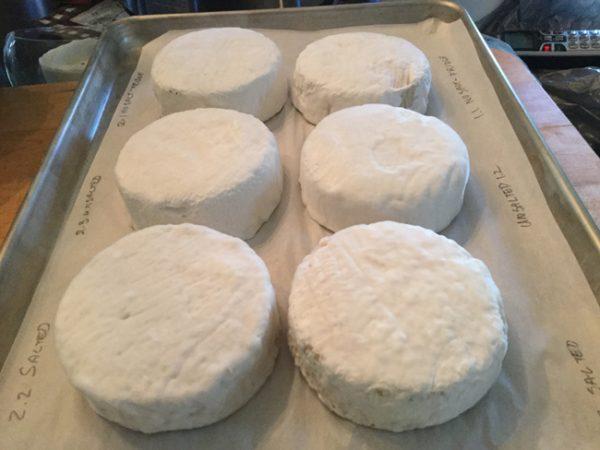 Cashew Camembert CheeseSM
