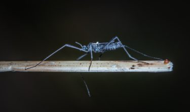 Mosquito Day