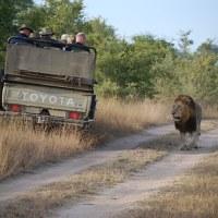 een klein stapje,dierenleed,safari