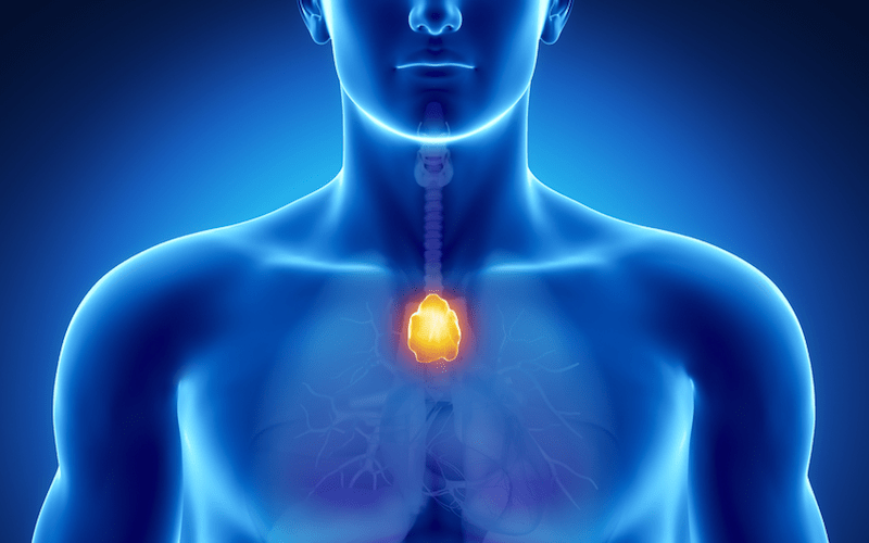 5 benefits of thumping your thymus - timely guidance, Skeleton
