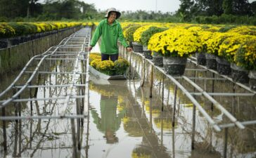 Travel5 hours ago  Century-old village in Mekong Delta blooms as Tet draws near Just a few weeks before Tet, local farmers in Sa Dec, the floral kingdom of the Mekong Delta work from dawn to dusk to prepare flowers...