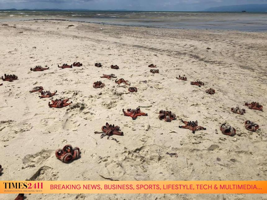 tourists must stop catching starfish in Phu Quoc TIMES24H