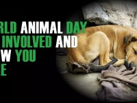 World Animal Day, 2018