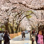 Tokio Japan kersenbloesem