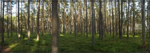 Pikanõmme mets