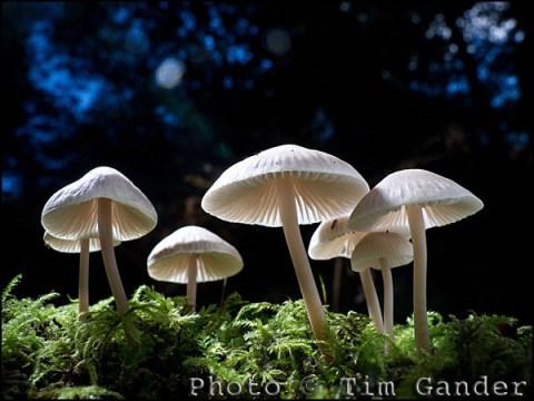 english woodland mushrooms