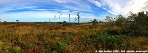 panoramic photo of heathland near Bournemouth, Dorset