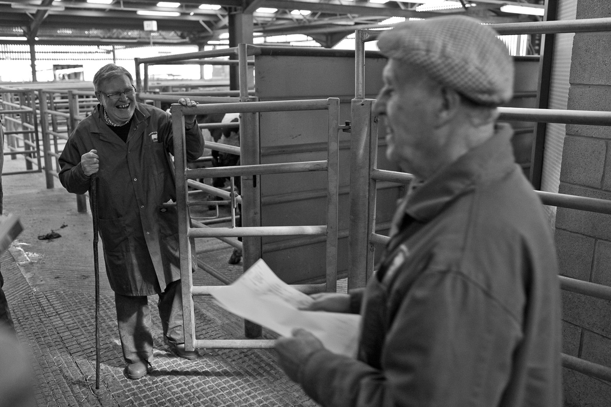 Two herdsmen chat and laugh behind the scenes at the cattle auction.