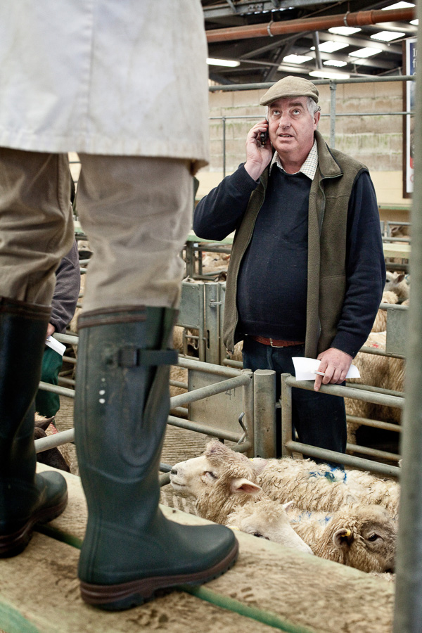 A dealer looks up to an auctioneer (who we can only see the back of his boots in green rubber wellies) while on the phone. Between them in a pen are sheep who are the subject of the trade.