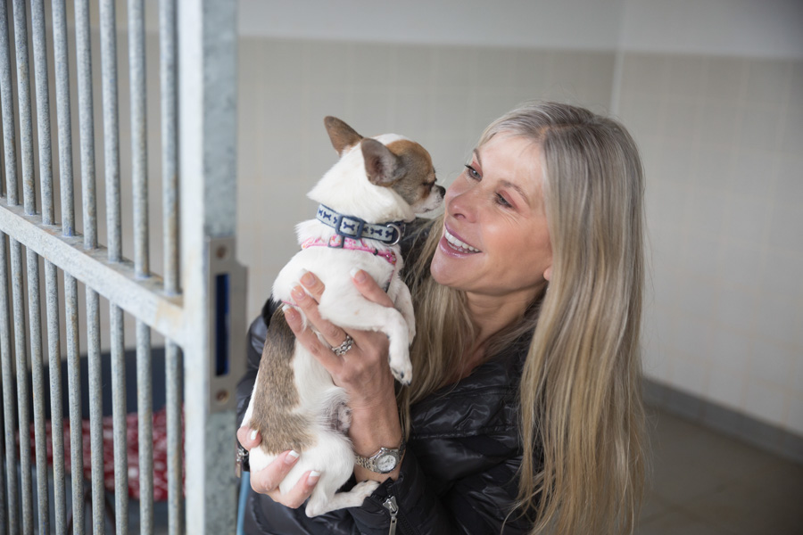 29/04/2016 Olympic swimmer and TV personality Sharron Davies wants local business people to sign up to the Bath Cats and Dogs Home Kennel Challenge which takes place on June 10th 2016. Sharron hopes canine friends like Chico will benefit from the funds raised from the Kennel Challenge event. Photo by Tim Gander. This image is free for editorial use in conjunction with the original press release from Bath Cats and Dogs Home. Contact Zena Jones Senior Fundraiser Tel: 01225 787335 Address: The Avenue, Claverton Down, Bath, BA2 7AZ Email: zenajones@bcdh.org.uk