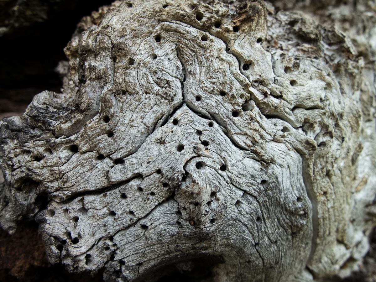 Closeup texture, dead tree.