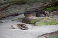Phoques Wharariki Beach