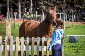 Balade a cheval
