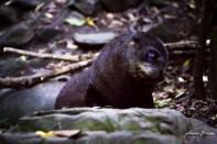 Bébés phoques à Kaikoura