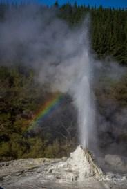 Geyser Wai-o-Tapu Rotorua
