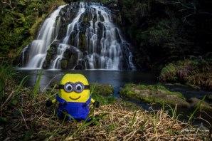 Owharoa Falls - Coromandel