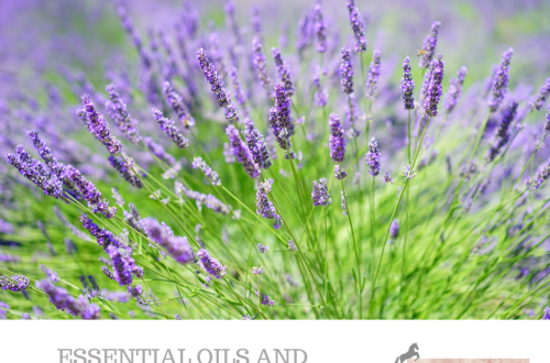 Essential Oils and Animals