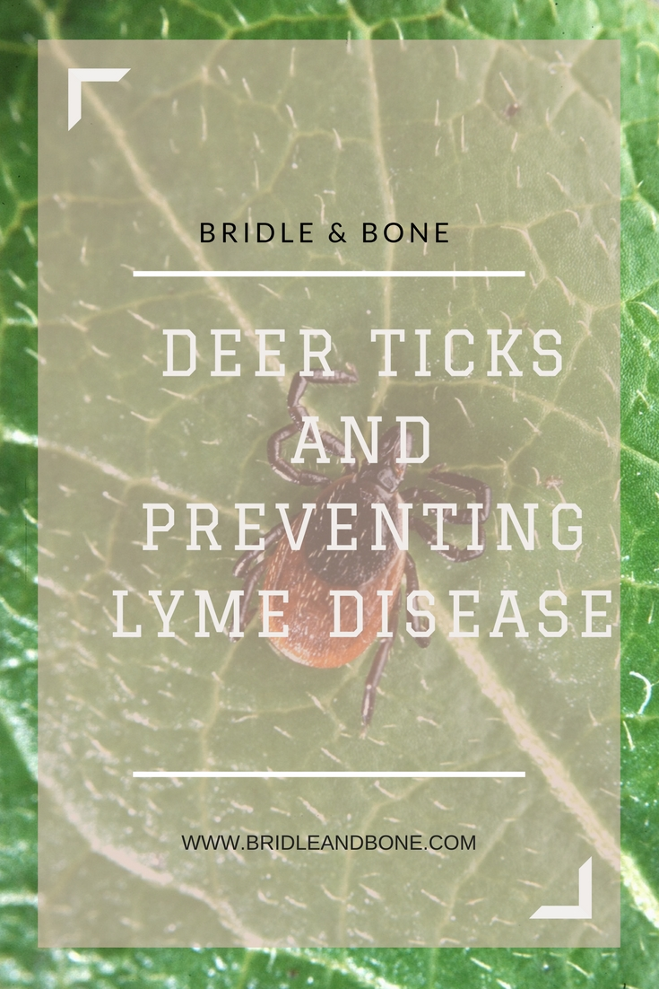 Everything You Need to Know to Prevent Ticks and Lyme Disease