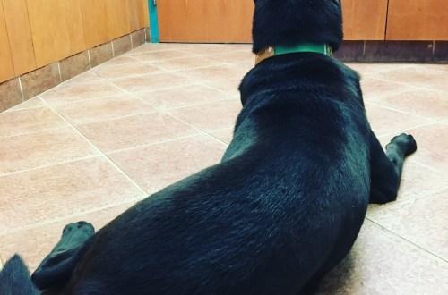 Gonzo visits the vet