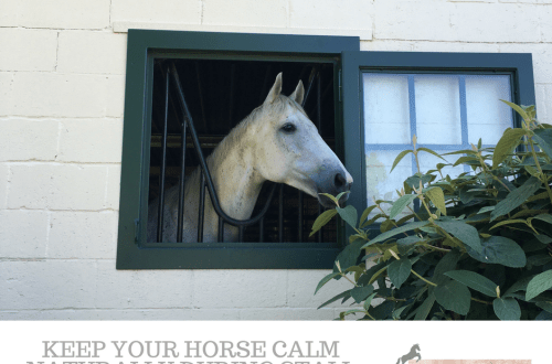 Horse Stall Rest Calm
