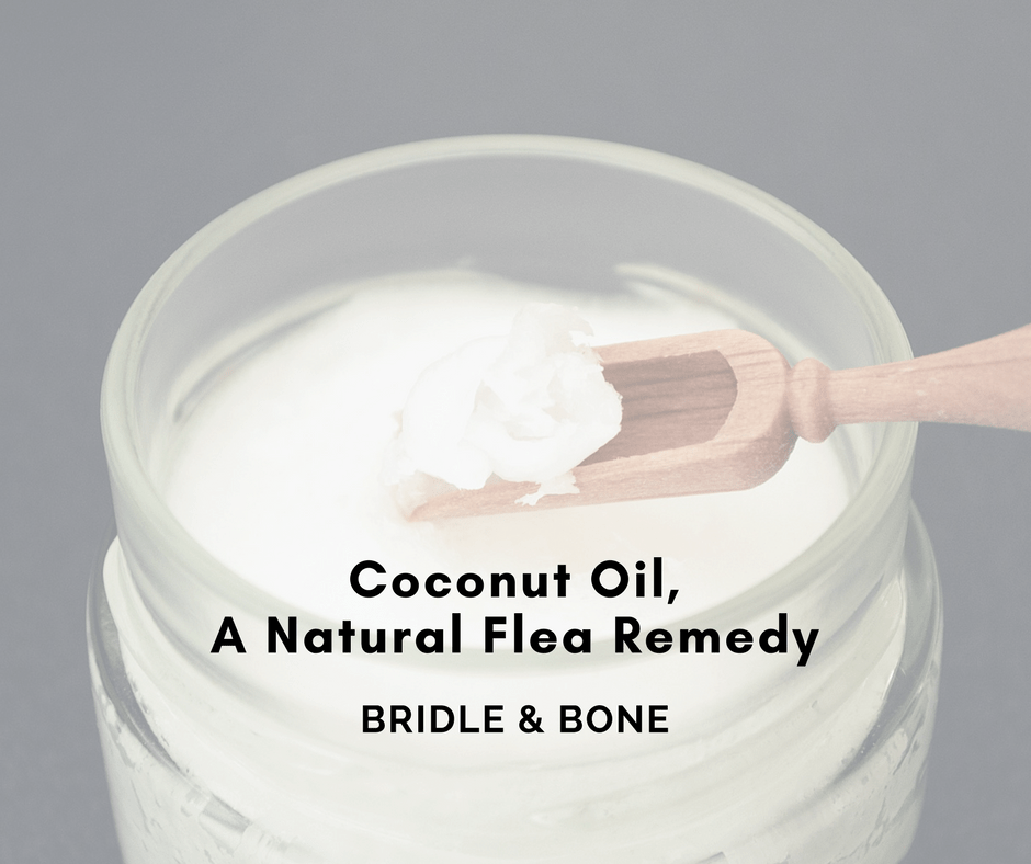 Guest Post: Coconut Oil, a Natural Flea Remedy