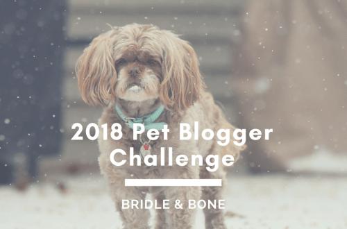 Pet Blogger Challenge
