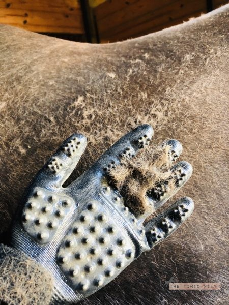 Hands-On Gloves Review The Timid Rider