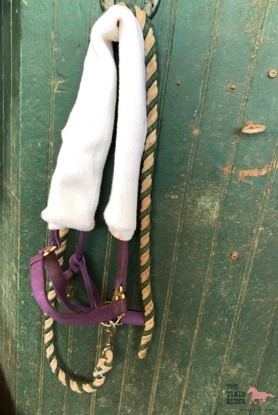 Halter with Girth Cover for Injured Horse