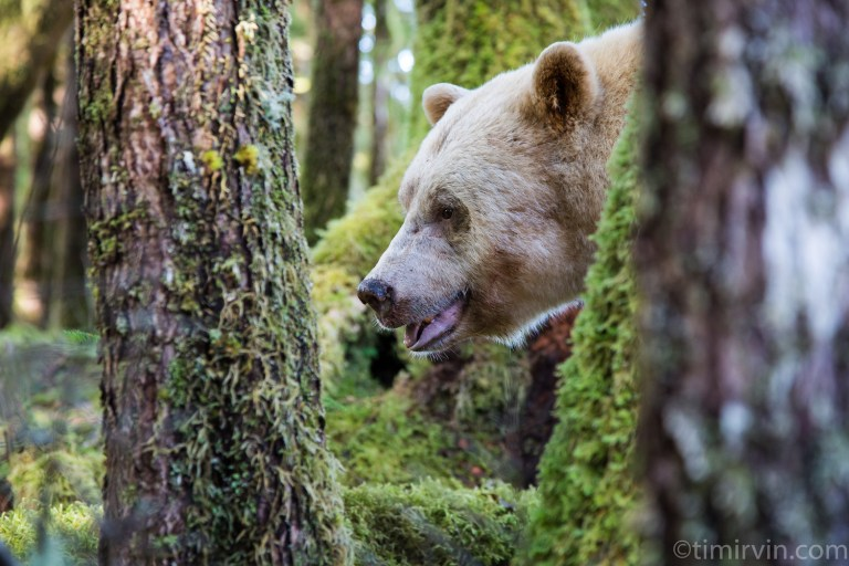 The winner of our spirit bear tour giveaway is…