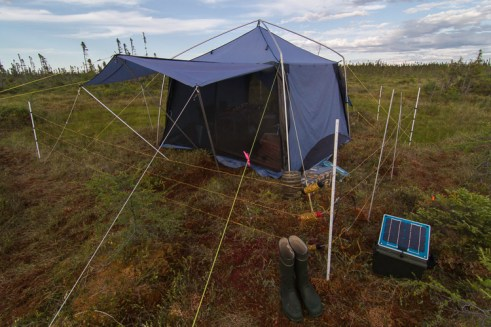 Office tent with solar powered electrified bear fence perimeter