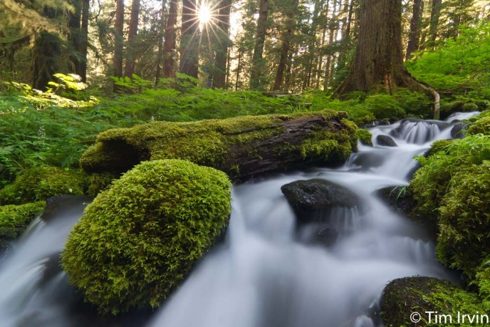 Mossy stream in Olympic National Park, Washington