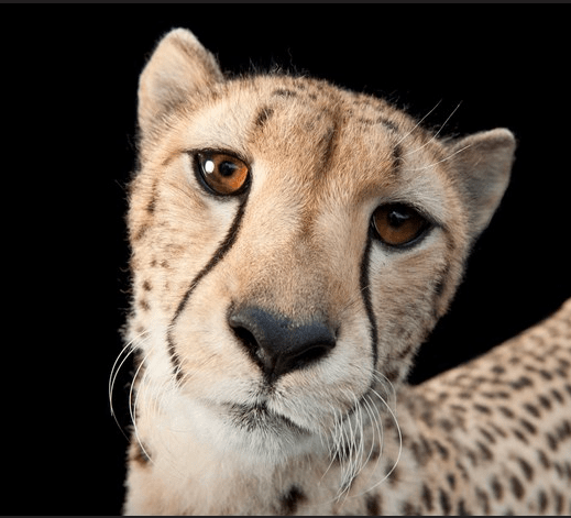 National Geographic's Joel Sartore: Making people care about endangered species one photo at a time