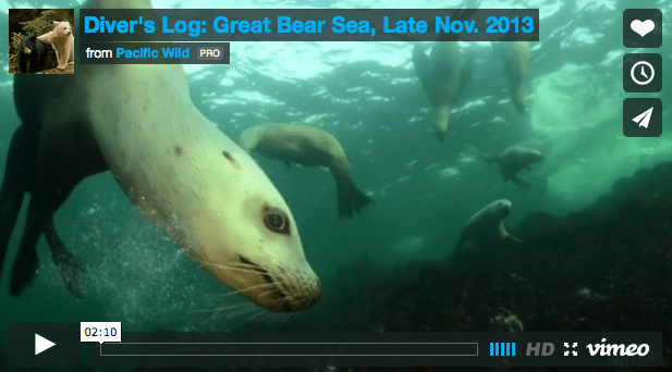 The underwater beauty of the Great Bear Sea