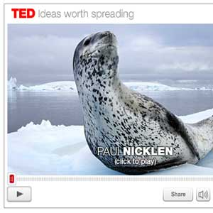 Paul Nicklen tells us about seals at TED