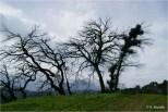 Ighil Bougueni - La nature renait de ses cendres (1) - Salem Mezaib