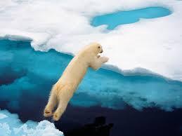 polar bear leaps